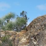 La Gomera Mountain Path